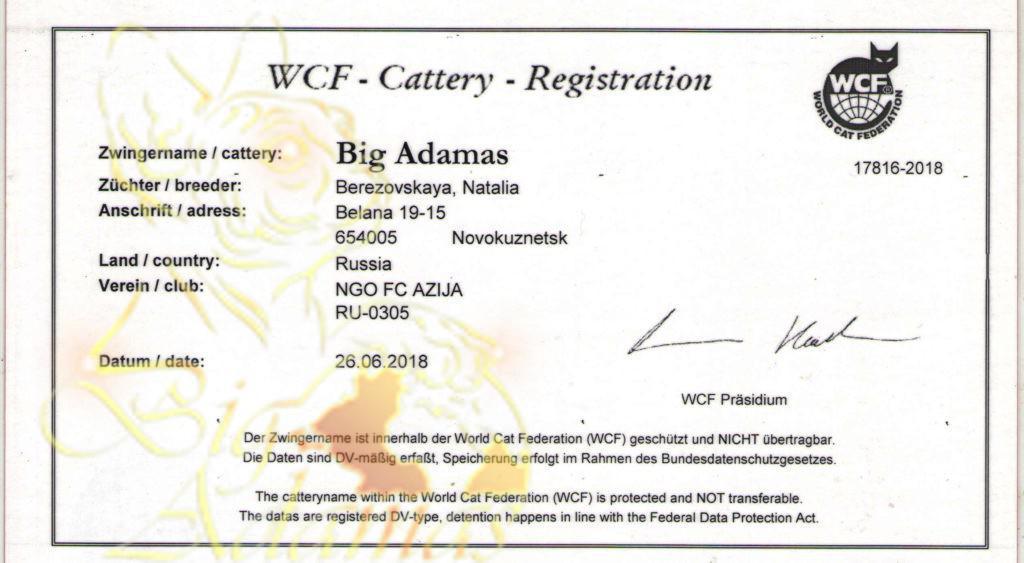 Cattery-Big-Adamas